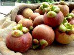 Mangosztán (mangosteen), Nopal