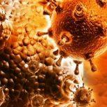 Candida, gomba, baktérium fertőzés, vírus
