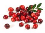 Tőzegáfonya, Cranberry, Vörös áfonya